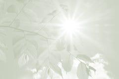 Folhas da faia e raios de esperança, fundo da simpatia Foto de Stock