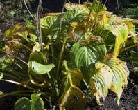Folhas da flor Imagens de Stock
