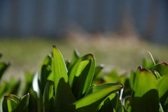 Folhas da flor foto de stock