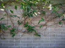 Folhas da flor branca e do verde Imagens de Stock