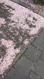 Folhas da flor na terra Imagens de Stock Royalty Free