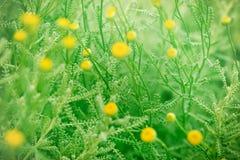 Folhas da flor no foco Fotos de Stock Royalty Free