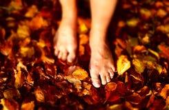 Folhas da floresta Imagem de Stock Royalty Free