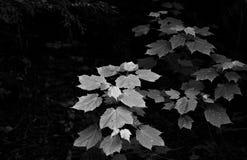 Folhas da floresta fotografia de stock royalty free