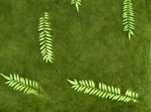 Folhas da floresta Fotos de Stock Royalty Free