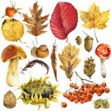 Folhas da floresta do outono da aquarela ajustadas Imagens de Stock