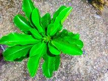 Folhas da folha fotografia de stock