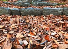 Folhas da folha e a escada de pedra Foto de Stock