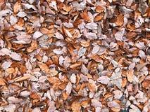 Folhas da folha na terra Foto de Stock Royalty Free