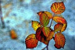 Folhas da framboesa em um fundo azul imagem de stock royalty free