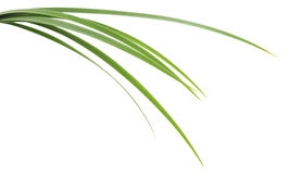 Folhas da grama verde Fotografia de Stock Royalty Free