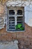 Folhas da hera que crescem através de janela quebrada fotografia de stock royalty free