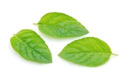 Folhas da hortelã Imagens de Stock