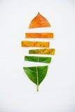 Folhas da idade diferente da árvore de fruto do jaque no backg de madeira branco Fotografia de Stock