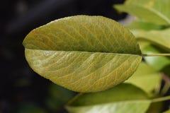 Folhas da laranja do outono do grupo do fundo outdoor seasonal foto de stock