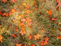 Folhas da laranja do outono na grama Imagem de Stock Royalty Free