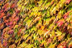 Folhas da laranja e do verde Fotos de Stock