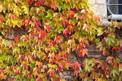 Folhas da laranja e do verde Fotografia de Stock