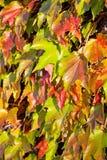 Folhas da laranja e do verde Imagens de Stock