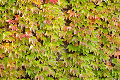 Folhas da laranja e do verde Imagem de Stock