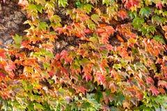 Folhas da laranja e do verde Imagens de Stock Royalty Free