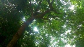 Folhas da luz do sol Imagens de Stock