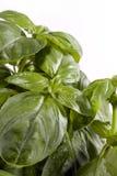 Folhas da manjericão Foto de Stock