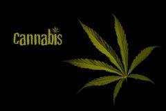 Folhas da marijuana em um fundo preto Fotografia de Stock