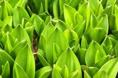 Folhas da mola Foto de Stock Royalty Free