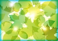 Folhas da mola ilustração do vetor
