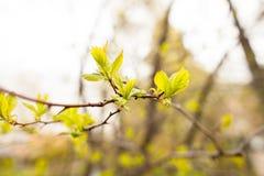 Folhas da mola fotos de stock