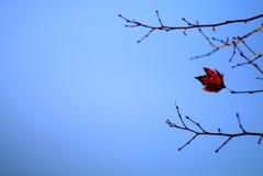 Folhas da mola Fotografia de Stock