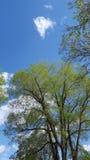 Folhas da mola sob o céu azul fotos de stock
