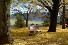 Folhas da nogueira-do-Japão na cadeira Fotos de Stock