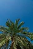 folhas da Palma-árvore Imagens de Stock Royalty Free