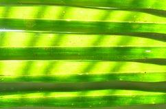 Folhas da palma do Nypa Imagem de Stock Royalty Free