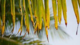 Folhas da palmeira do coco contra o céu azul na praia tropical do paraíso Conceito do fundo do feriado das férias do turismo do v vídeos de arquivo