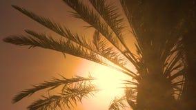Folhas da palmeira no vento video estoque