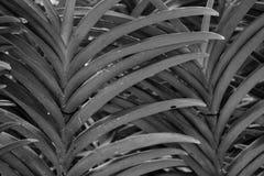 Folhas da paralela Fotos de Stock