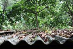 Folhas da parte superior do telhado imagens de stock royalty free