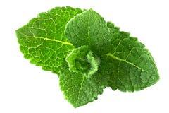 Folhas da pastilha de hortelã Imagens de Stock