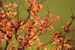 Folhas da planta Fotografia de Stock