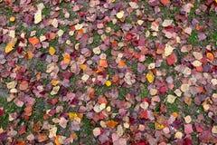 Folhas da planta da queda na terra Imagens de Stock