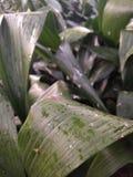 Folhas da planta verde imagens de stock