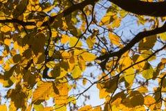 Folhas da praia de Yelow Fotos de Stock