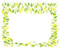 Folhas da primavera Imagens de Stock Royalty Free
