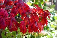 Folhas da queda Fotografia de Stock Royalty Free