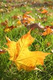 Folhas da queda Imagem de Stock Royalty Free