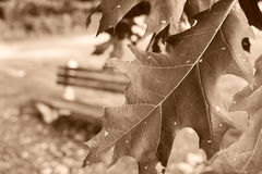 Folhas da queda Foto de Stock