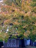 Folhas da queda Fotografia de Stock